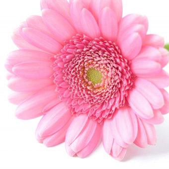 花の形態と使用区分
