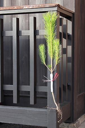 飾り 方 門松 門松の飾り方 雄松と雌松は左右どちら?飾る期間や略式の場合は?