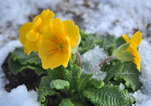 ガーデニングの冬対策