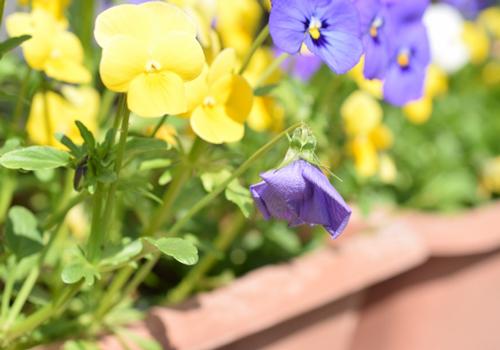花がらを摘む