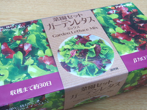 菜園セット・ガーデンレタス