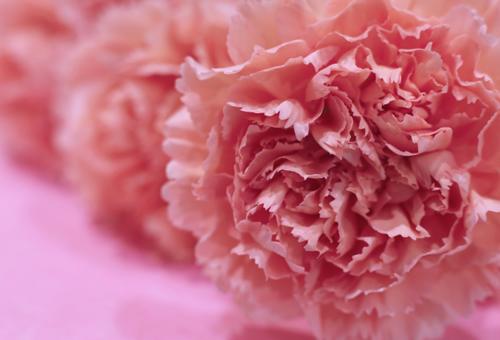 花の資格とカーネーション