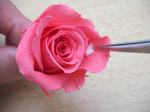 プリザーブドフラワーの開花方法