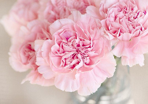 エチレンガスの影響を受けやすい花