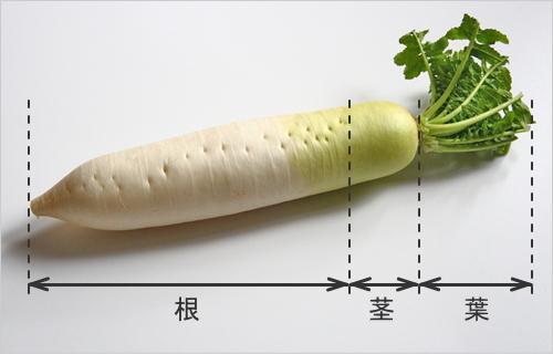 大根の葉・茎・根